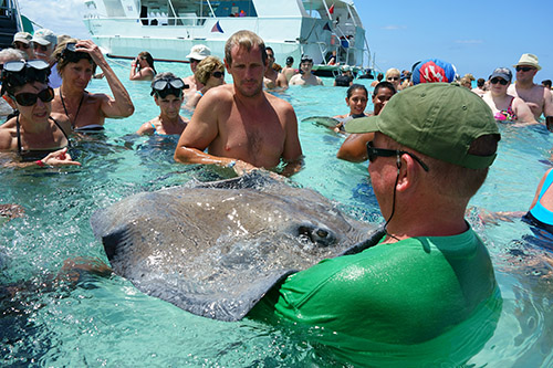 Stingray City, an excursion from the tender port of Grand Cayman Island from Royal Caribbean's Navigator of the Seas on our Caribbean Cruise vacation